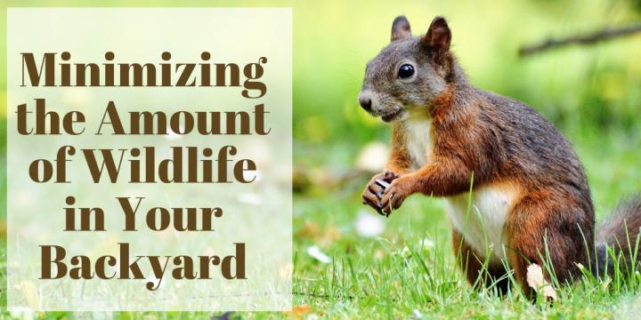 Minimizing the Amount of Wildlife in Your Backyard