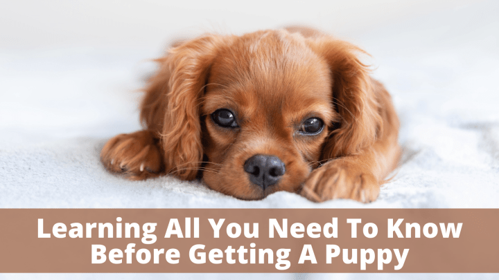Learning All You Need To Know Before Getting A Puppy