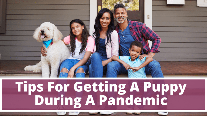 Tips For Getting A Puppy During A Pandemic